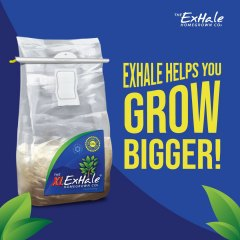 Exhale Helps You Grow Bigger Social Asset