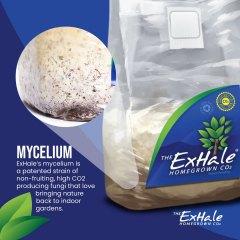 Exhale Mycelium Social Asset