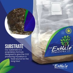 Exhale Substrate Social Asset