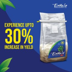 Exhale Experience Upto 30% Increase In Yields Social Asset