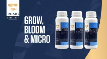 Remo-Grow-Bloom-Micro-Header-Mobile