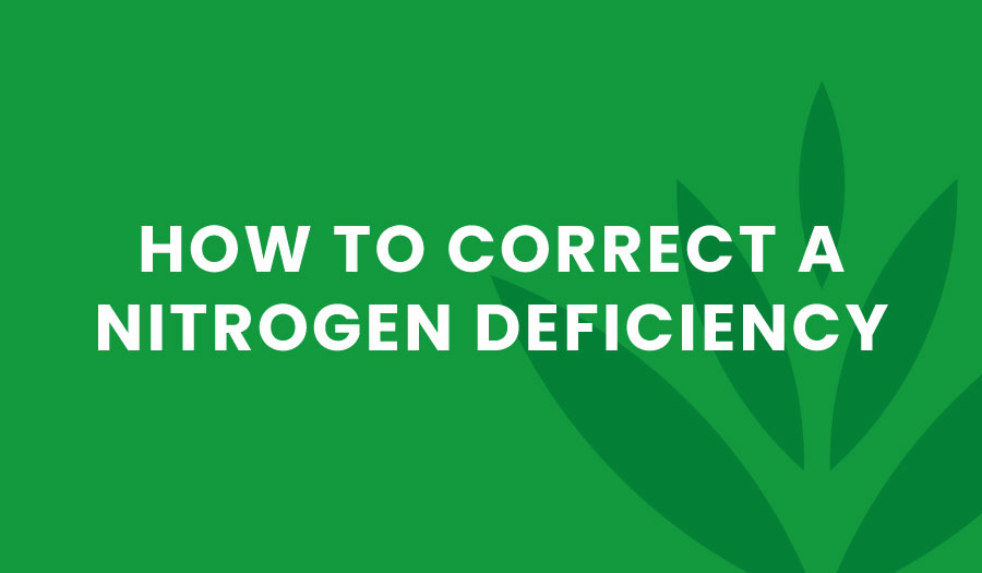 How to Correct a Nitrogen Deficiency