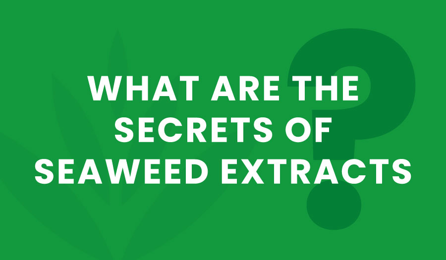The Secrets of Seaweed Extracts